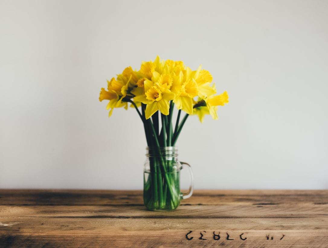 yellow daffodils lemonbrook cleaning company